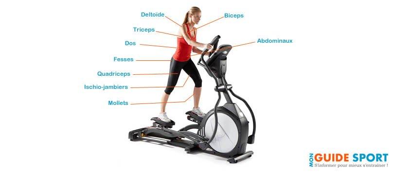 Les muscles travaillés sur vélo elliptique