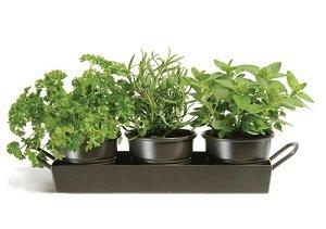 herbes-cuisine-alimentation-saine