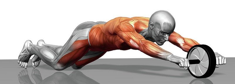 Muscles travaillés par la roue abdominale