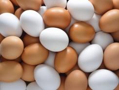 Quelles sont les Meilleures Protéines d'œufs ?